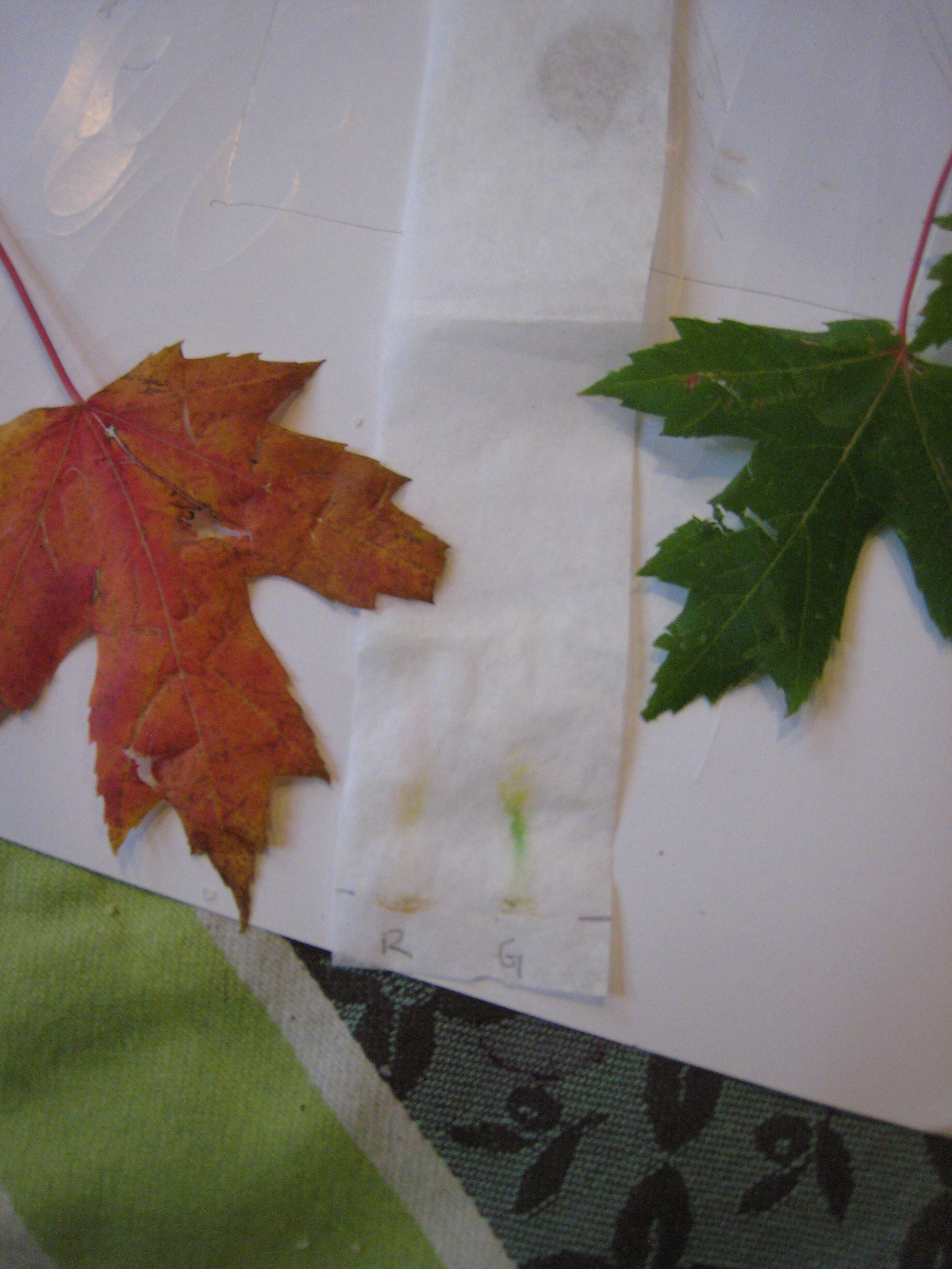 plant chromatography for kids the kitchen pantry scientist
