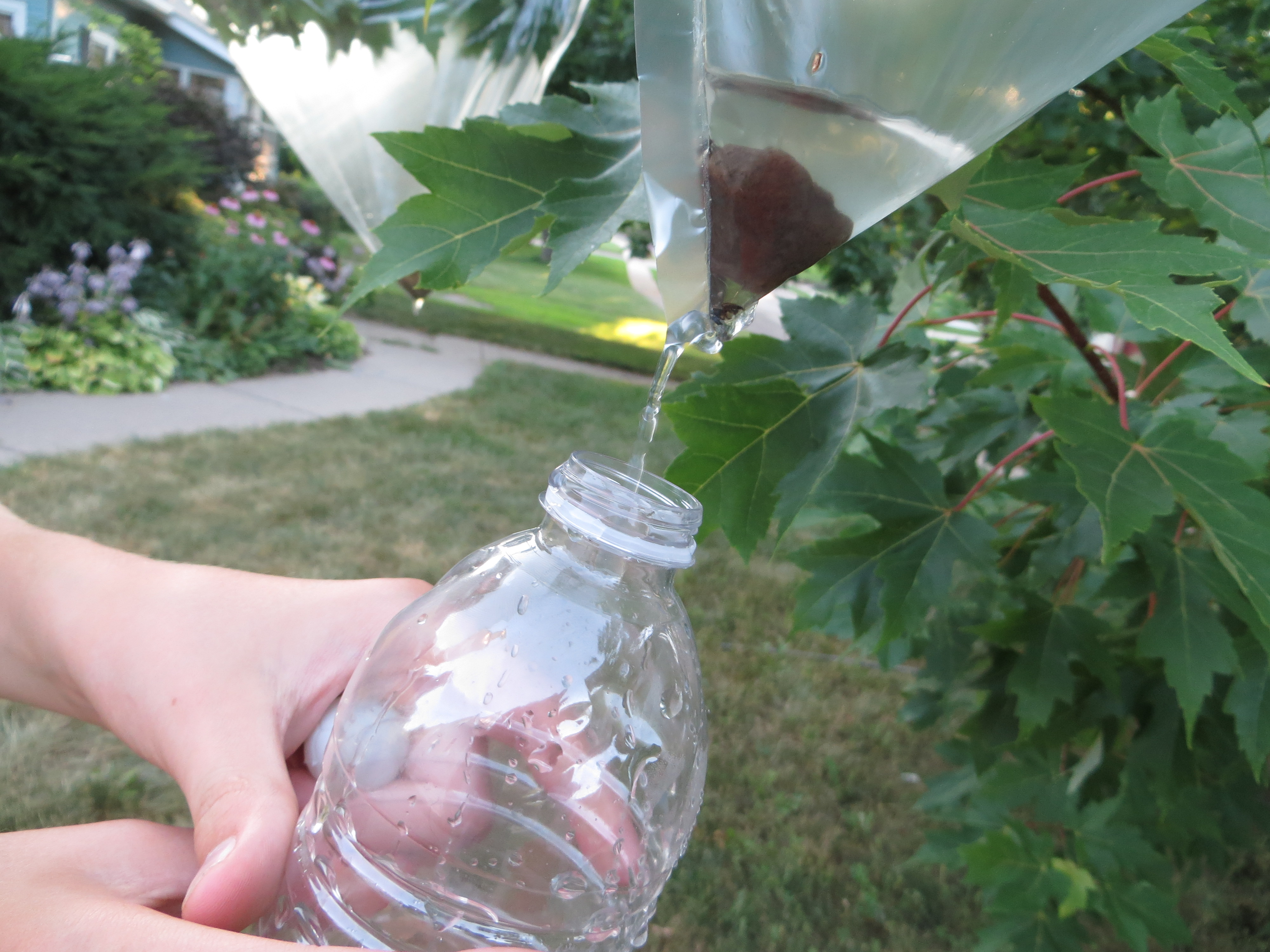 How to Collect Water From Plants forecasting