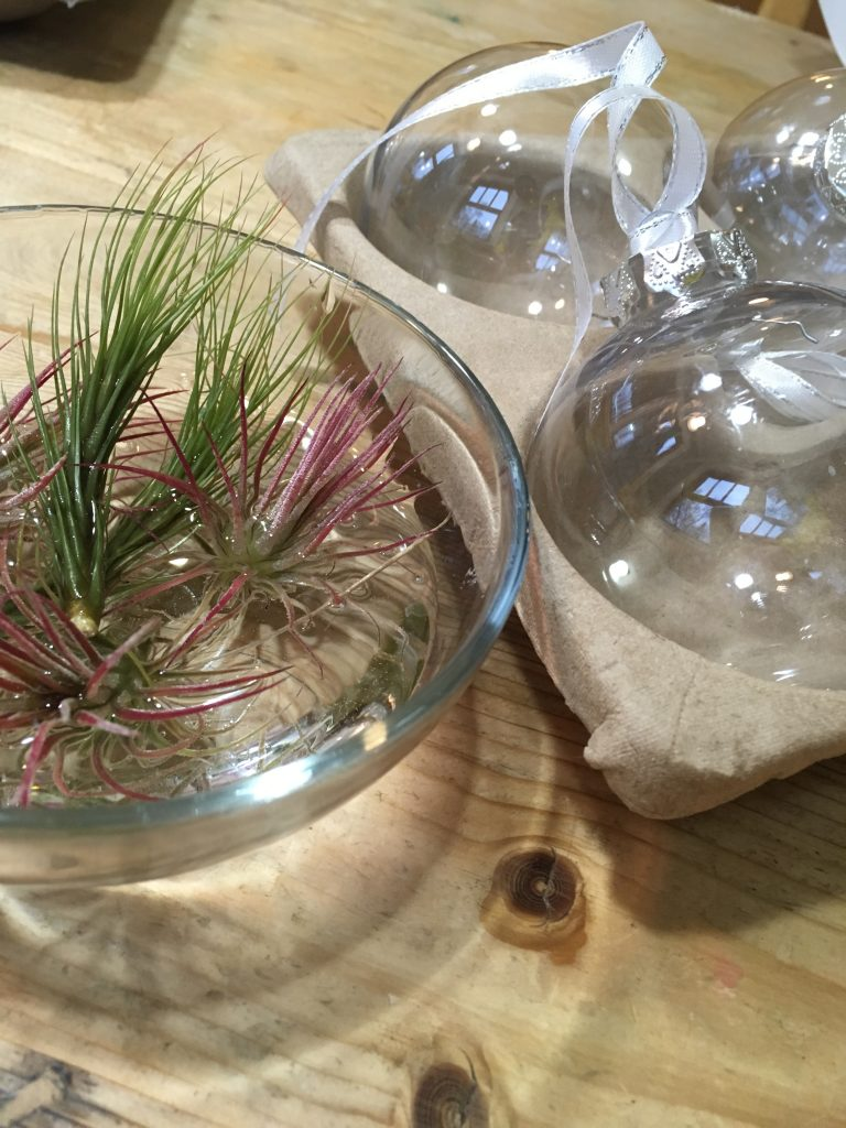 Tillandsia ornaments (Kitchen Pantry Scientist.com)
